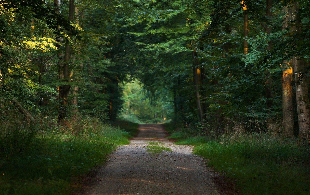 Det får du inte i de danska skogarna